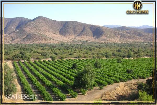 Vùng trồng nho Atacama