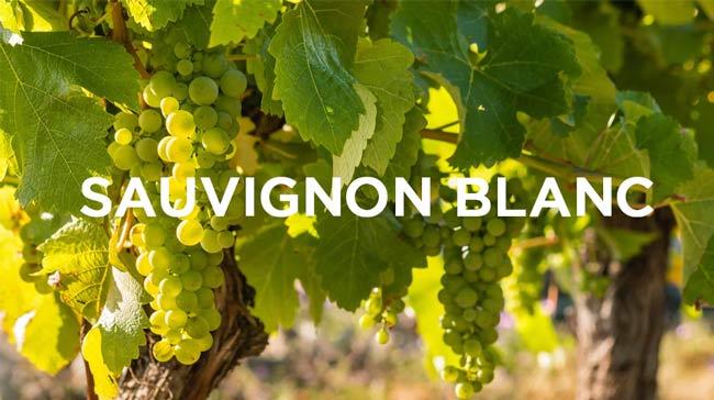 Nho Sauvignon Blanc