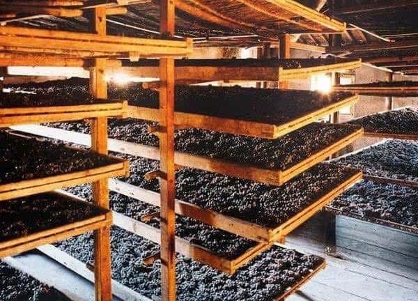 Quy trình sản xuất Rượu vang 1954 Appassimento Primitivo Puglia