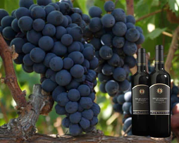 Quy trình sản xuất rượu vang 88