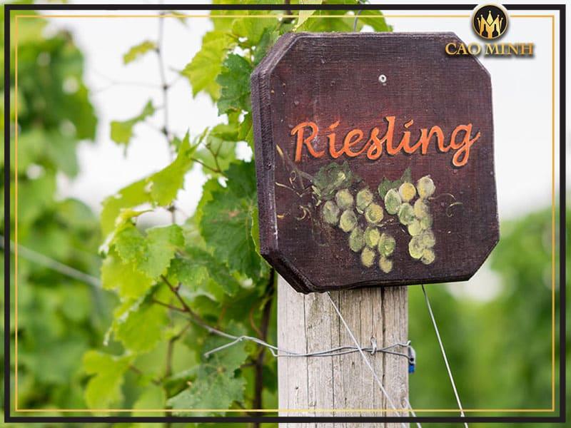 Đặc điểm hương vị Rượu vang được làm từ nho Riesling