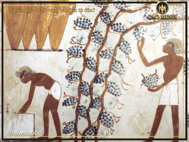 Nguồn gốc rượu vang bắt nguồn từ đâu