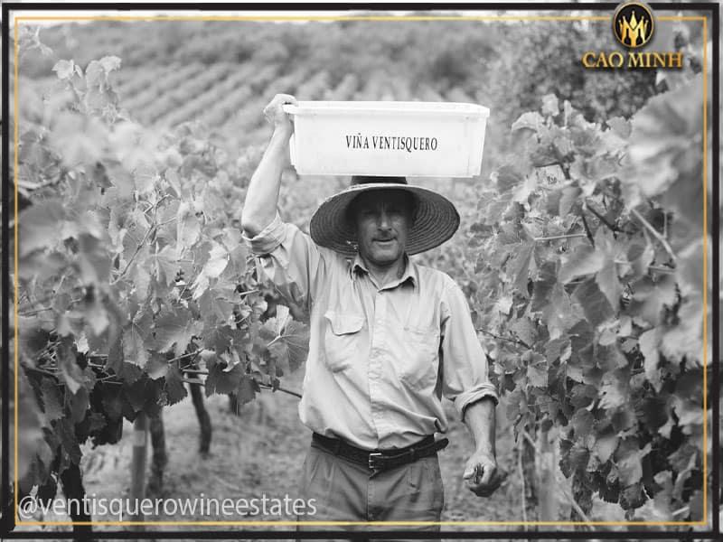 Nhà sản xuất rượu vang Queulat Reserva Cabernet Sauvignon
