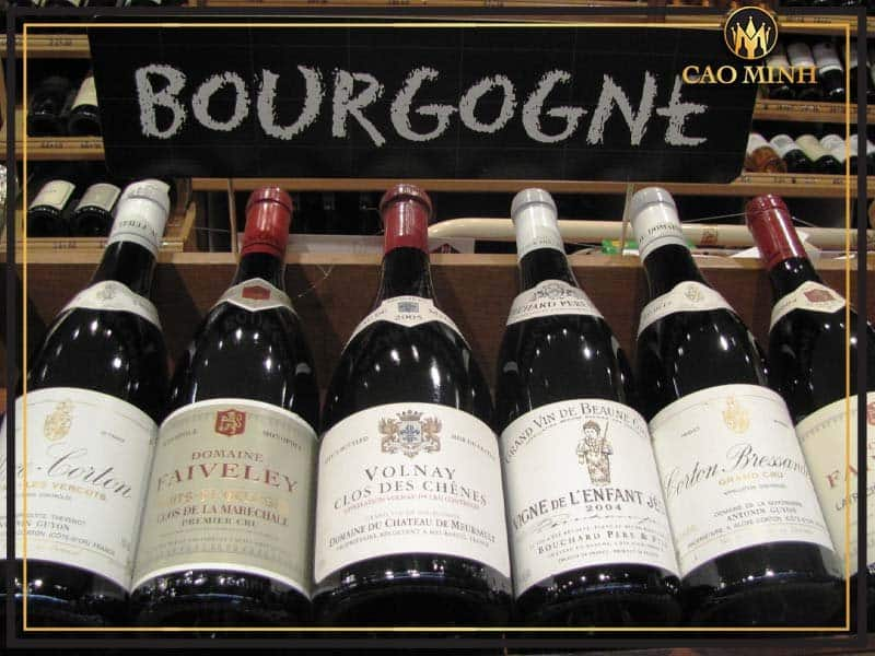 Rượu vang Bourgogne và những kiến thức THIẾT YẾU bạn nên biết