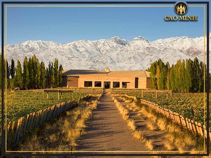 Các vùng trồng nho và các loại nho sản xuất rượu vang Argentina - mendoza