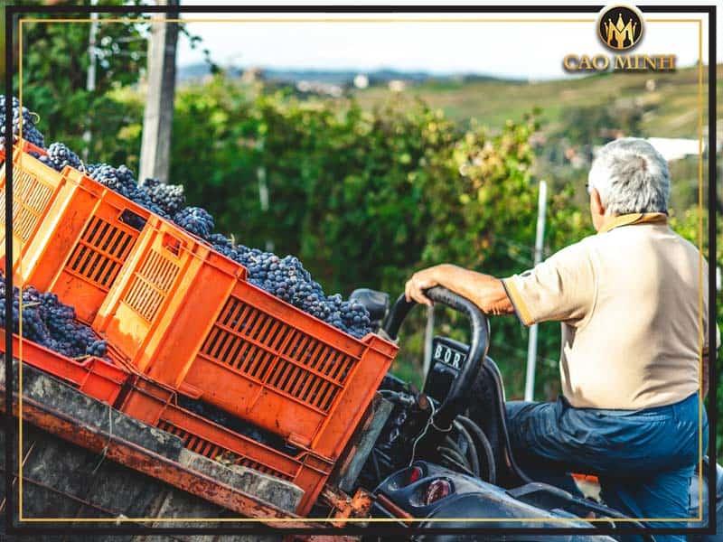 Quy trình sản xuất rượu vang Escudo Rojo