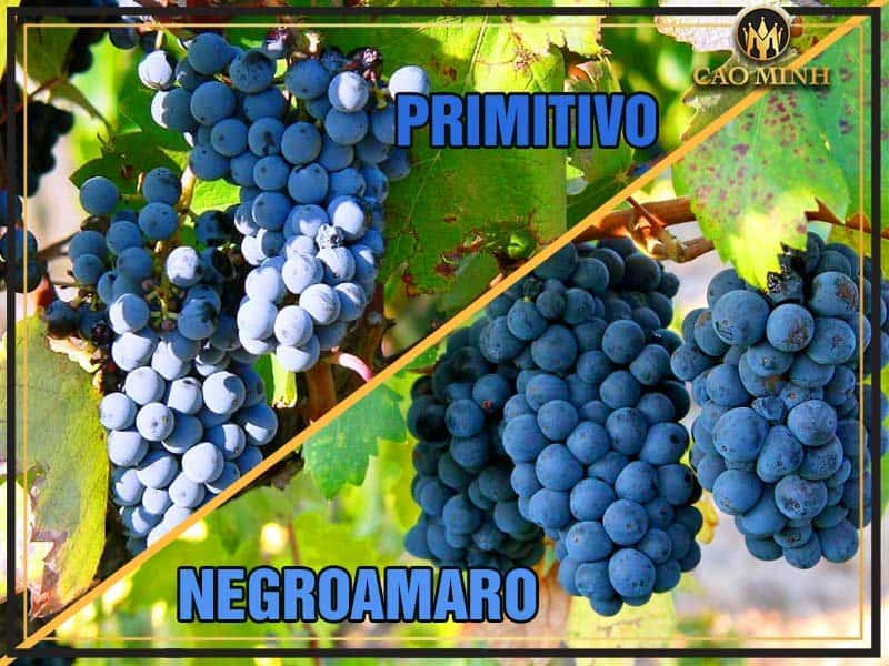 ruou-vang-y-farmers-of-wine