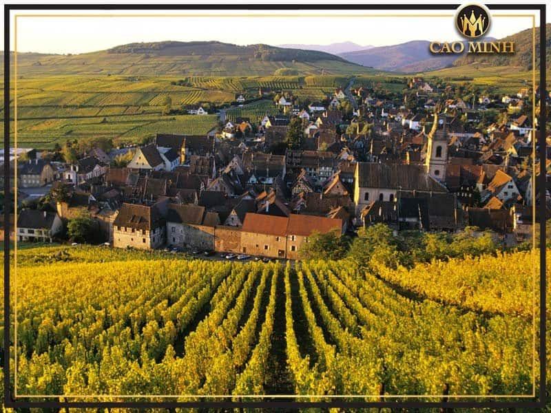 Vuon-nho-Alsace