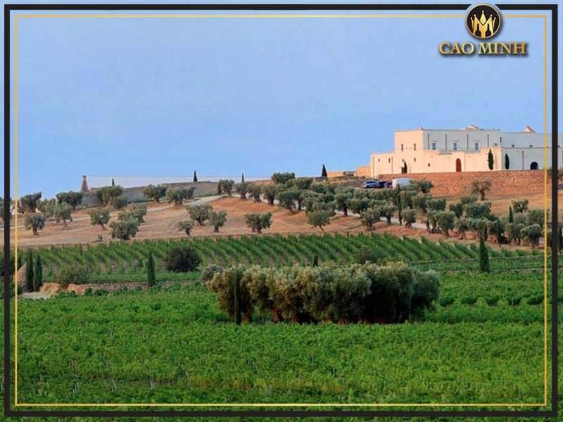 Vùng sản xuất rượu vang Primitivo nổi tiếng