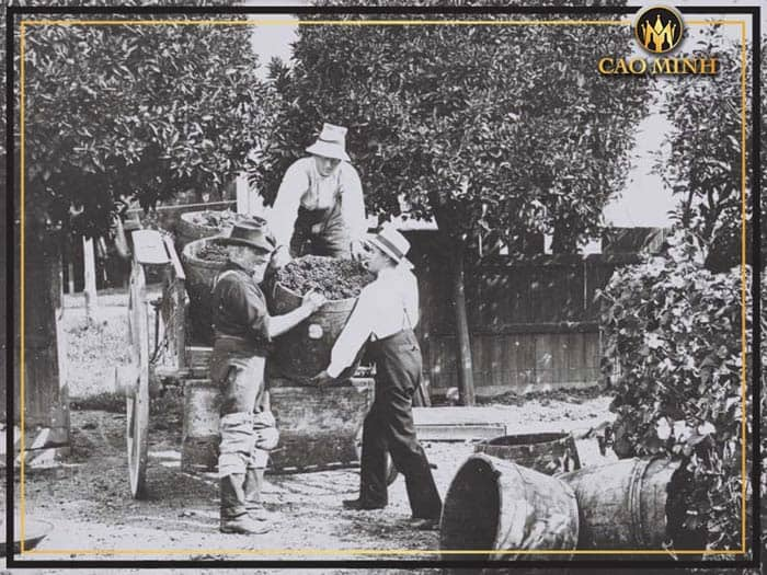 Lịch sử rượu vang New Zealand