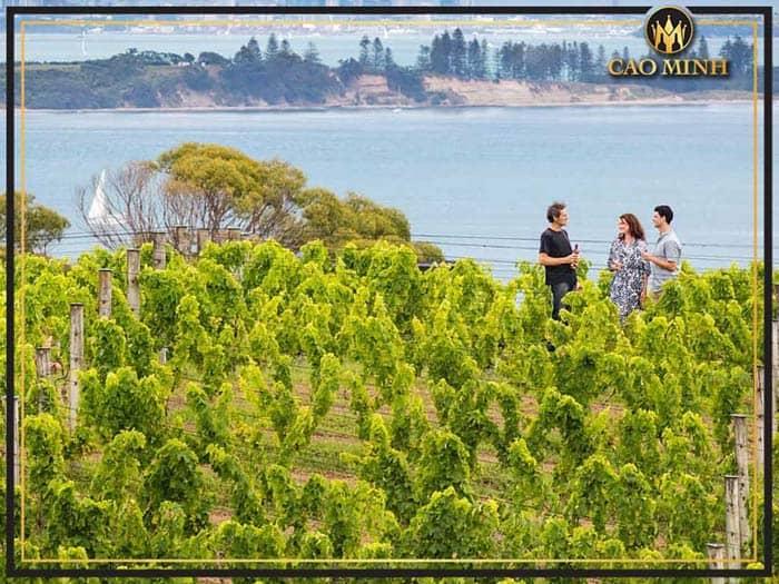 Vùng trồng nho New Auckland