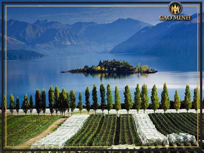 Vùng trồng nho Central Otago